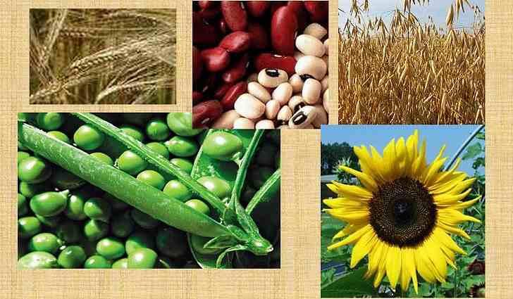 Какие лекарственные растения содержат витамины