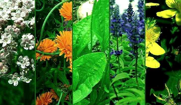 Лечебные травы в помощь при недержании мочи у женщин