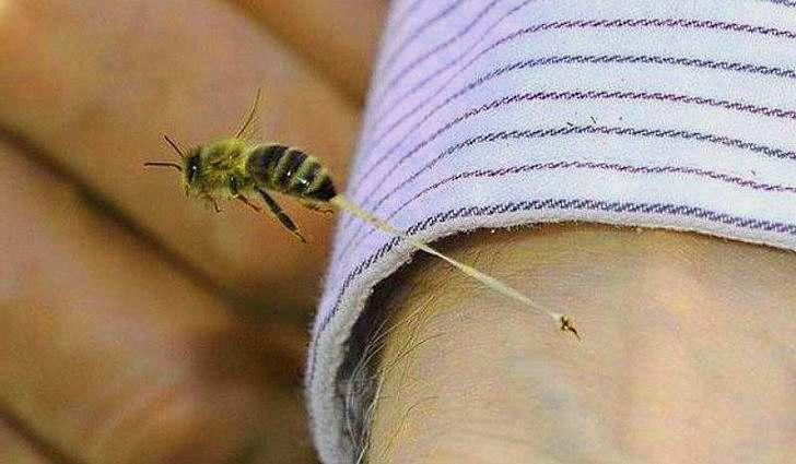 Лечит укусы насекомых