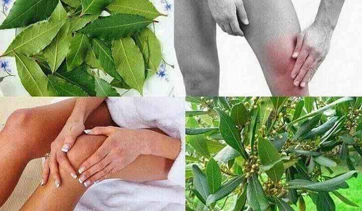 Лечение суставов отваром лаврового листа