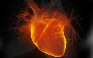 нагрузка на сердце