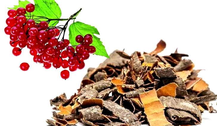 Настой коры и веток красной рябины - народное средство после инсульта