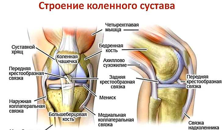 Сумка с недугами - коленный сустав